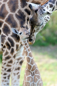 http://miami.cbslocal.com/photo-galleries/2013/11/06/zoo-miami-shows-off-their-newest-addition/